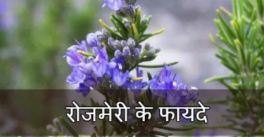 rosemary-aur-uske-fayde-hindi